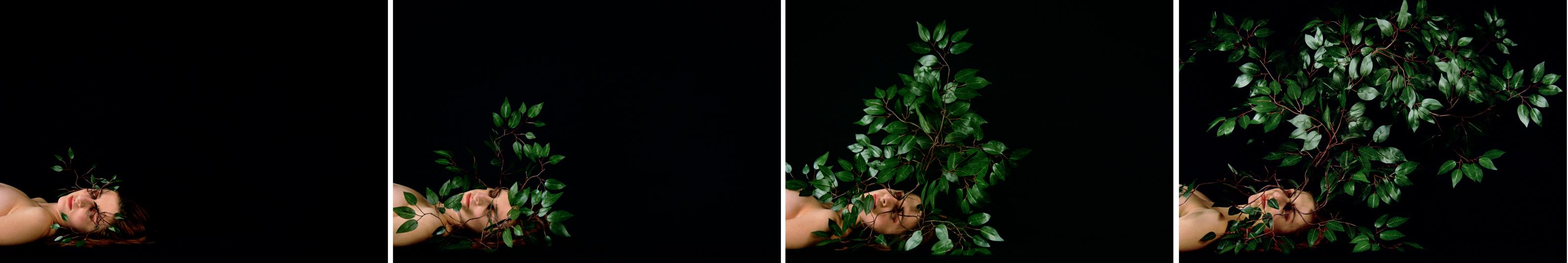 St (Naturaleza muerta), 2004. C-print